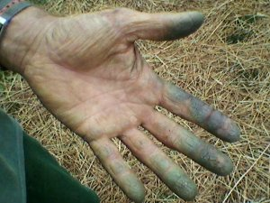 Bob tomato hands 2